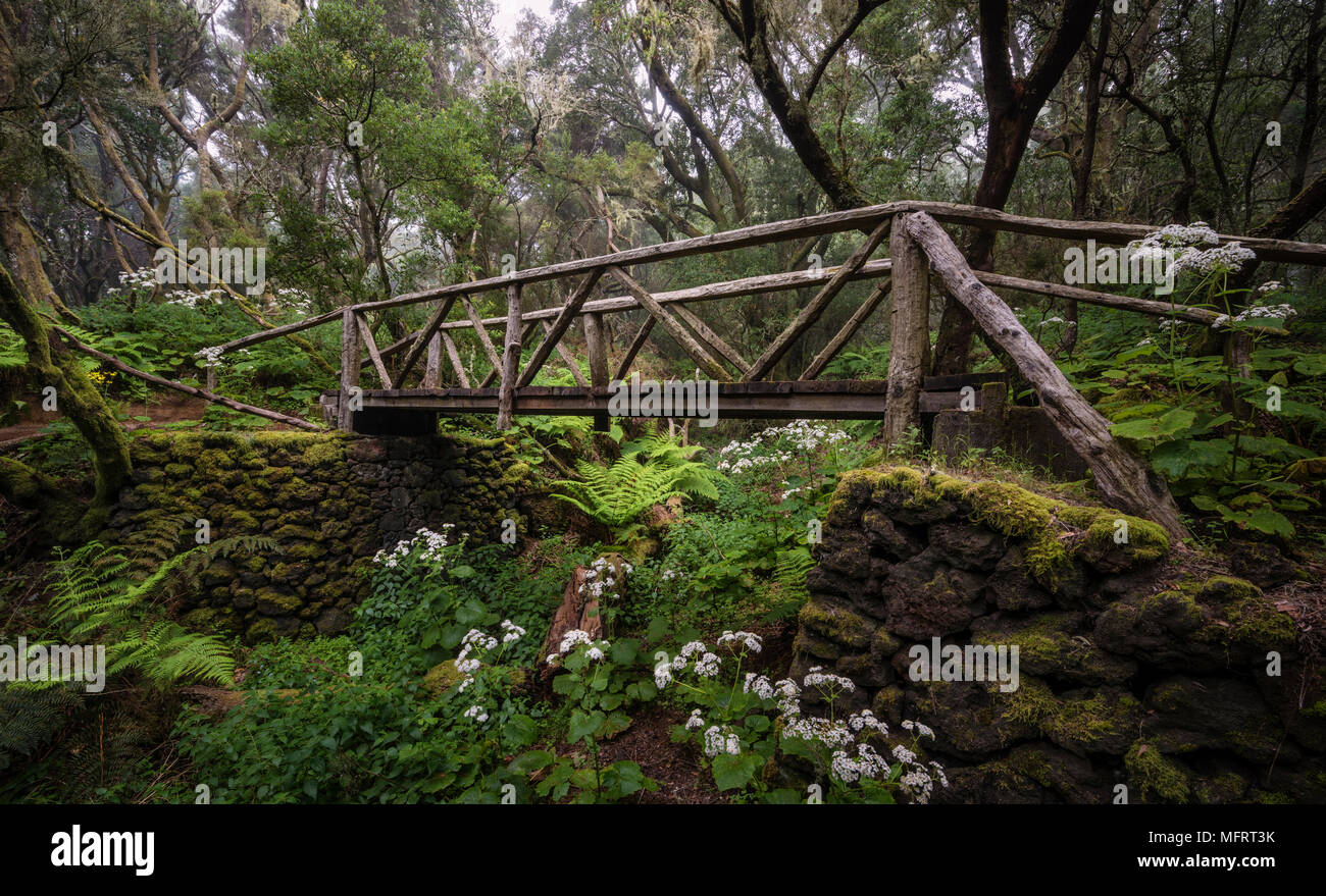 Footpath with wooden bridge in cloud forest, laurel forest, Raya la Llania, El Hierro, Canary Islands, Spain Stock Photo