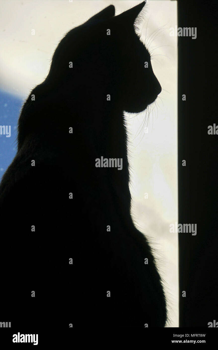 Silhouette of a sitting cat Stock Photo
