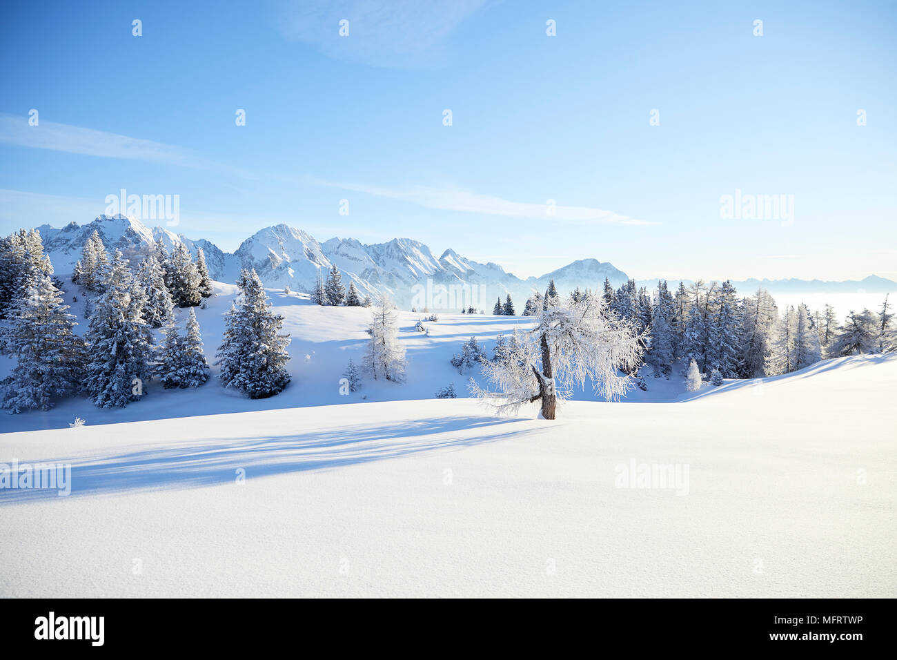 Winter landscape, Simmering Alm, Obsteig, Mieming, Tyrol, Austria - Stock Image