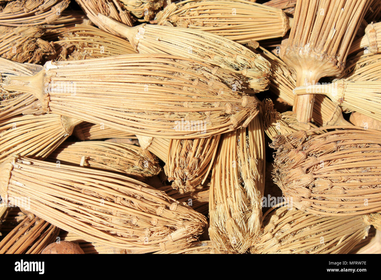 'Cure-dents' - Berber Toothpicks - the dried heads of Toothpickweed(Ammi visnaga) - Stock Image