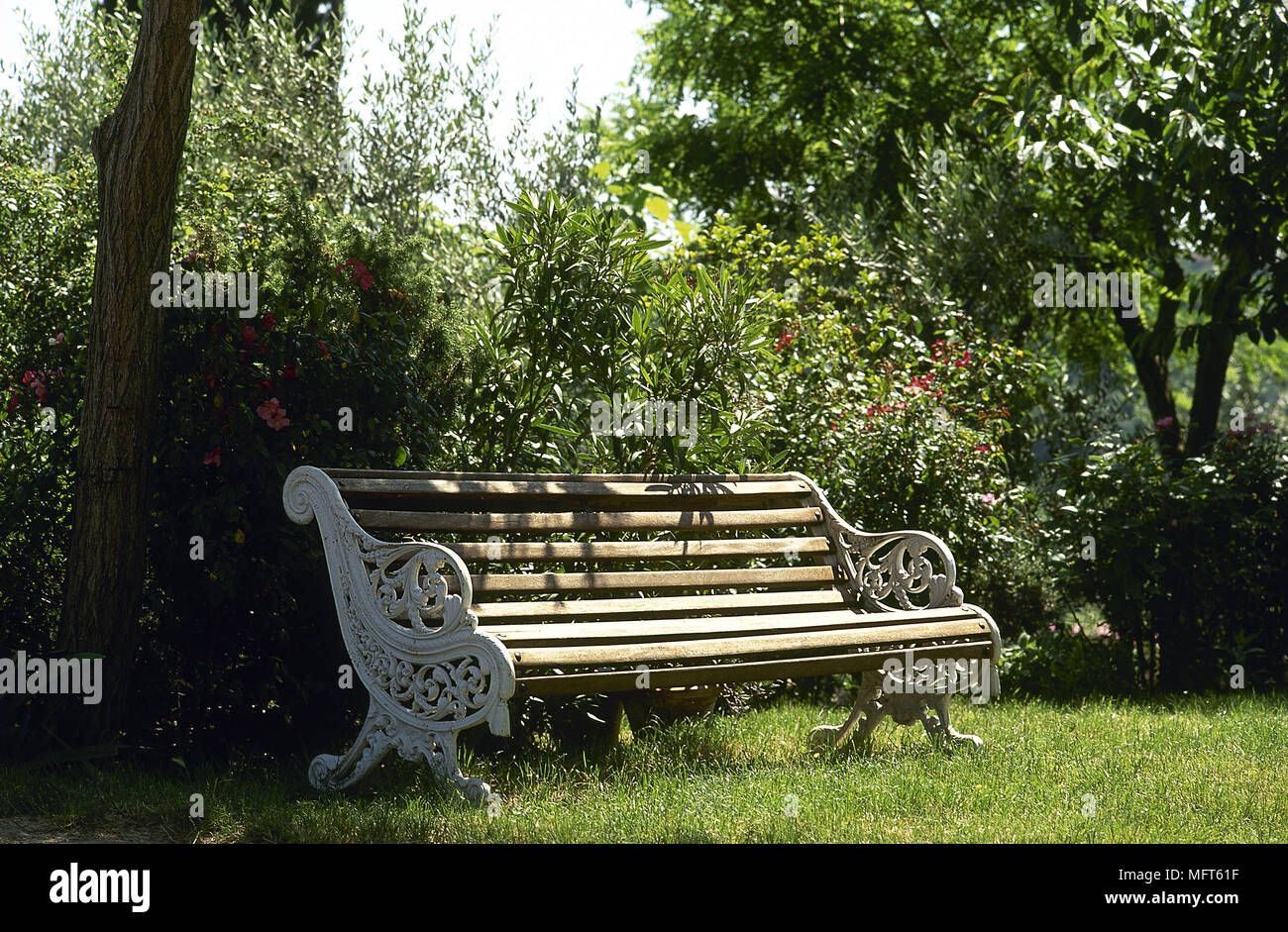 Picture of: Cast Iron Wooden Slatted Bench Seat In Garden Set Under Tree Stock Photo Alamy