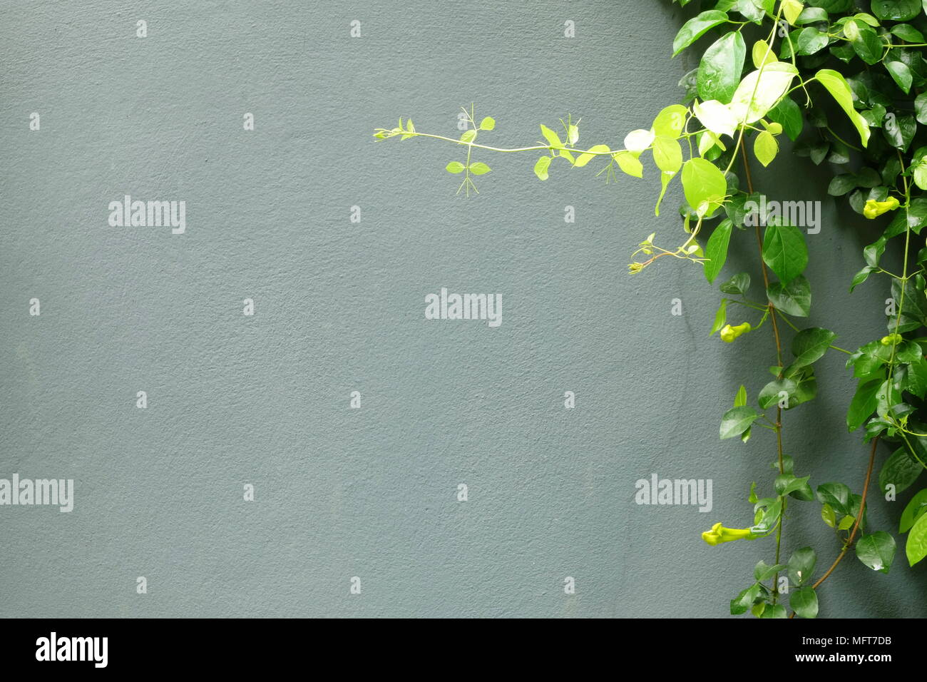 Leaves with Concrete Background. - Stock Image