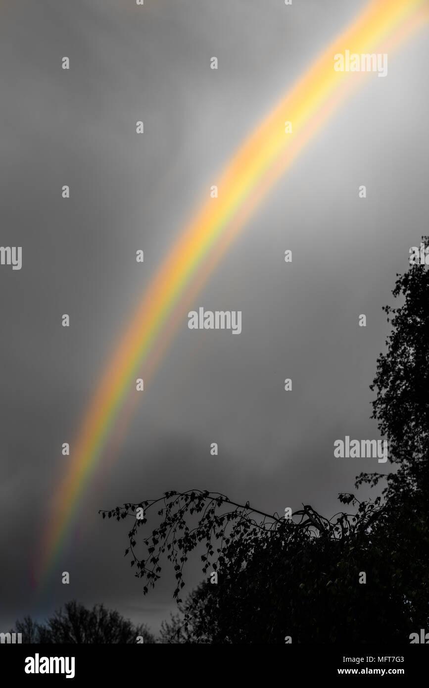 Rainbow arc across a grrey sky and above some trees. - Stock Image