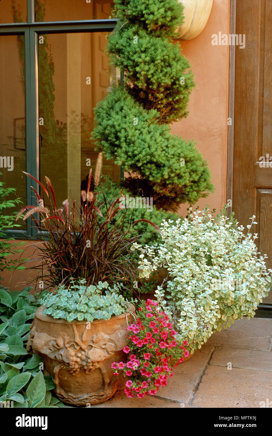 Garden containers with plantings of Pennisetum setaceum ÔRubrumÕ ...