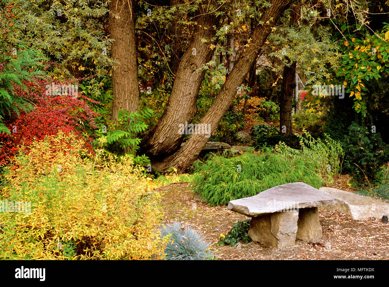Stone seat in woodland garden amongst planting of Hosta cv, Festuca ...