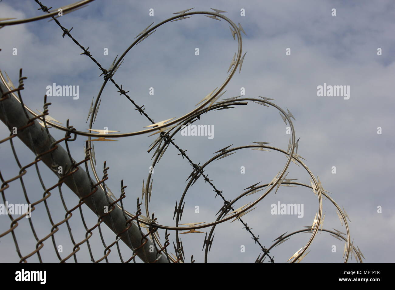 Razor sharp barbed wire coiled on top of a chain link fence Stock ...