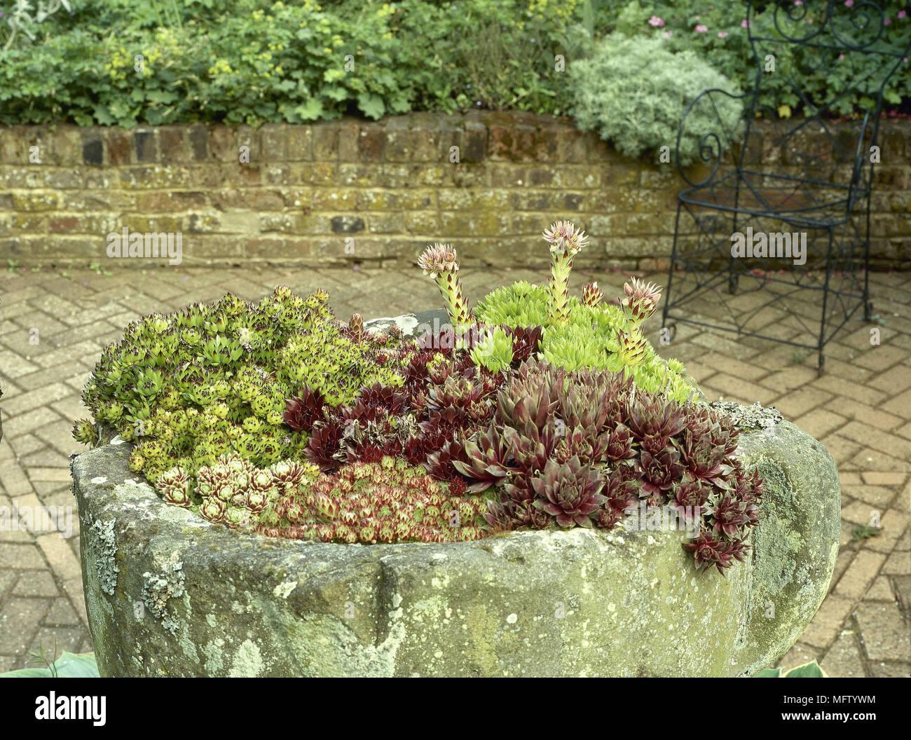 Garden Feature Ancient Touf Filled With Plants Brick Patio Area Gardens  Detail Stone Planter Trough Sedums Block Paving