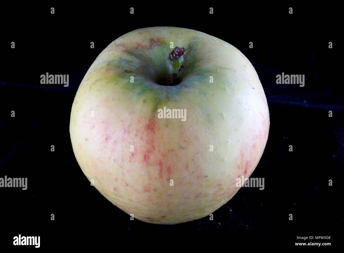 Old German Apple Cultivar 'Rheinland Ruhm' - Stock Image