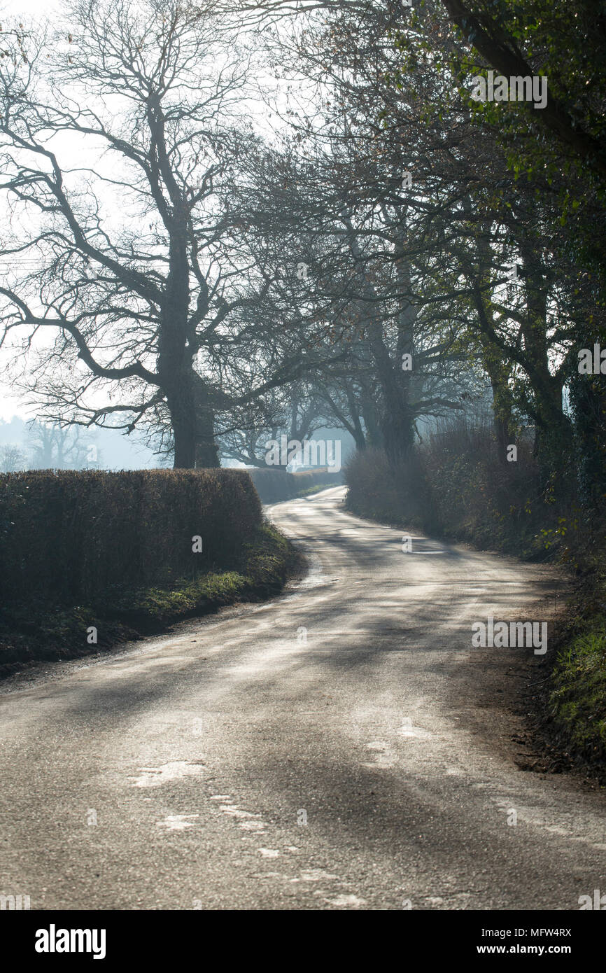 A winding country road flanked by hawthorn hedgerows on a hazy, sunny day in rural North Dorset England UK - Stock Image