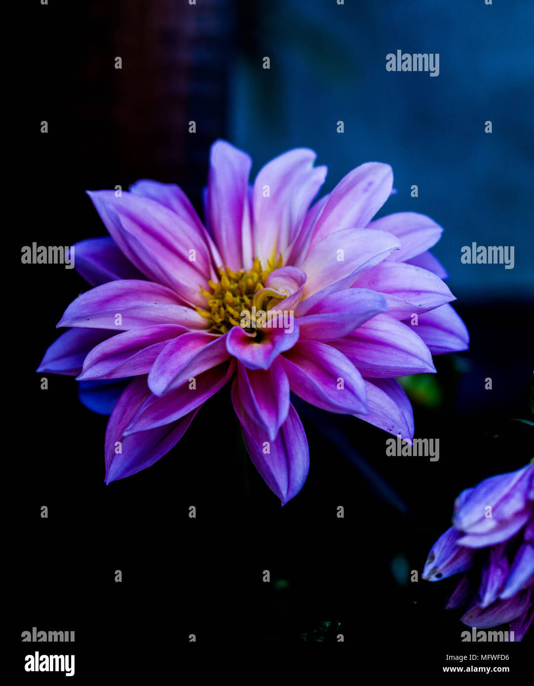 Beautiful flowers, calming, vibrant colours - Stock Image