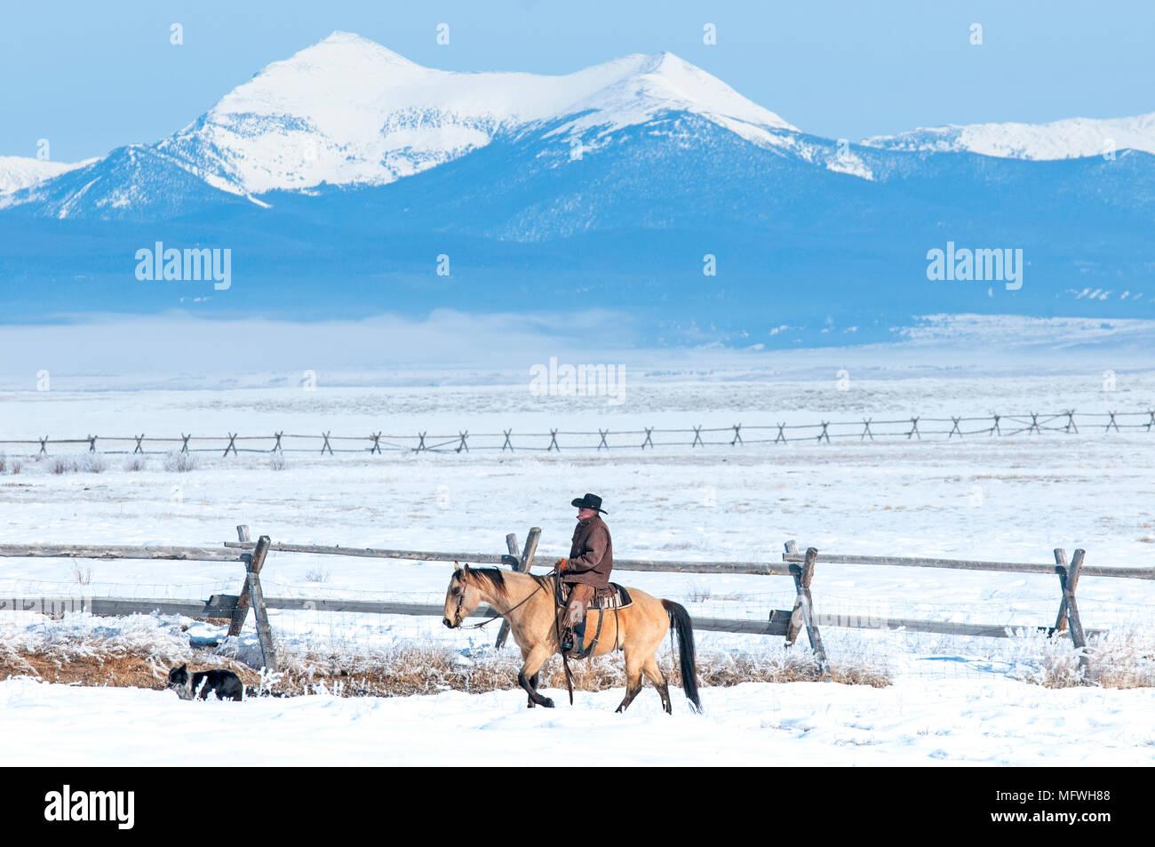 Montana Cowboy Horseback in Winter Snow - USA Pintler Mountains Stock Photo  - Alamy