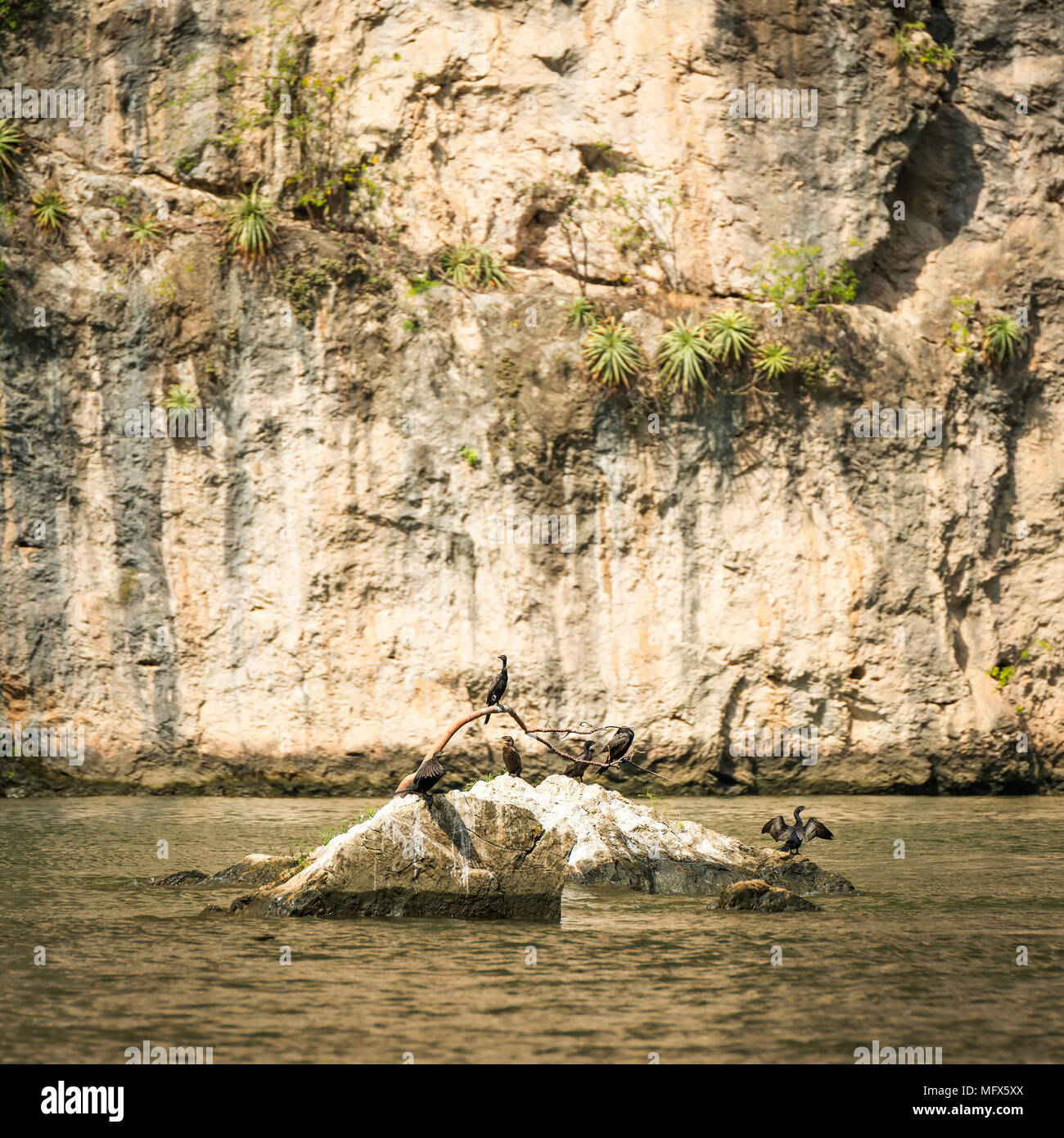 Birds sunbathing on rock in the Grijalva River of Sumidero Canyon Chiapas Mexico Stock Photo