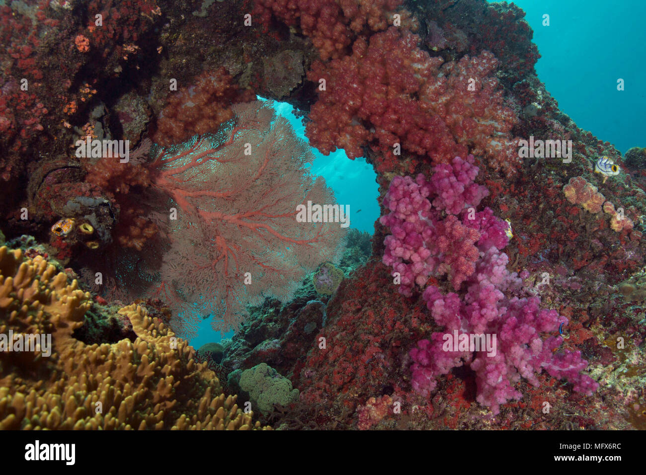 Unimaginable size of  coral gardens, diversity of forms and fabulous colors. Picture was taken in the Ceram sea, Raja Ampat, West Papua, Indonesia Stock Photo