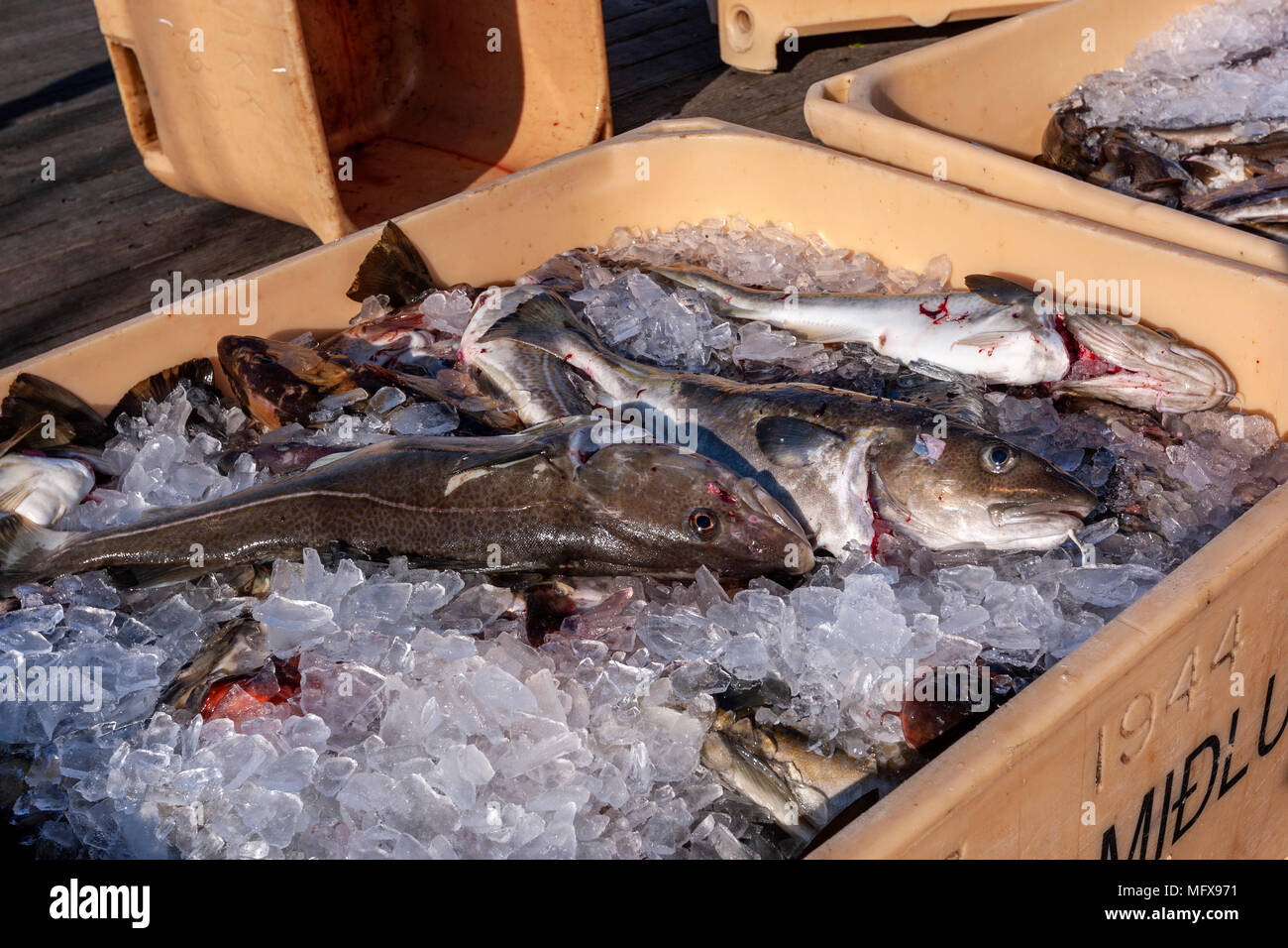 Fish Storage High Resolution Stock Photography And Images Alamy