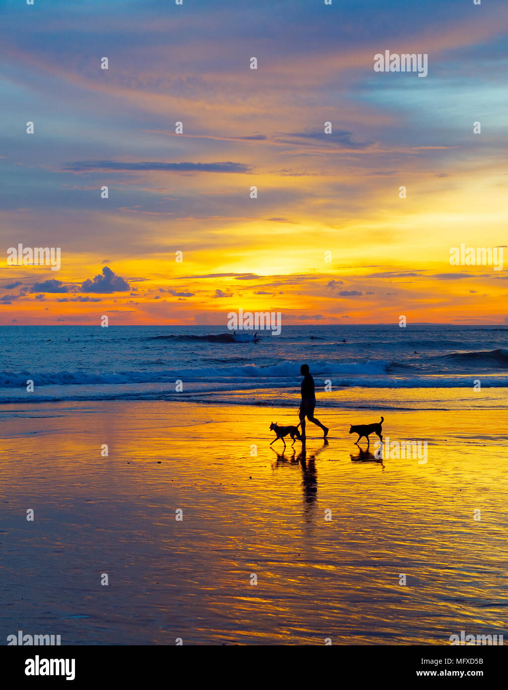 Silhouette of a man walking with the dogs on a beach at sunset. Bali island, Indonesia Stock Photo