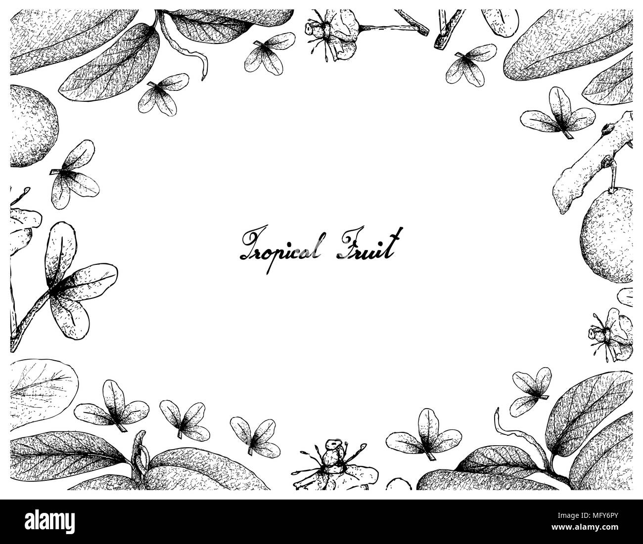 Tropical Fruits Illustration Frame Of Hand Drawn Sketch African