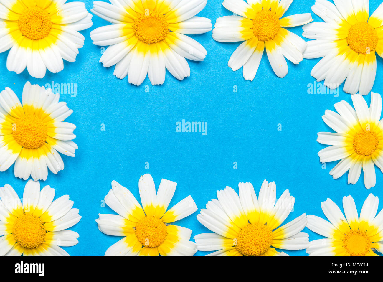 Rectangular Frame Formed By White And Yellow Flowers On A Blue