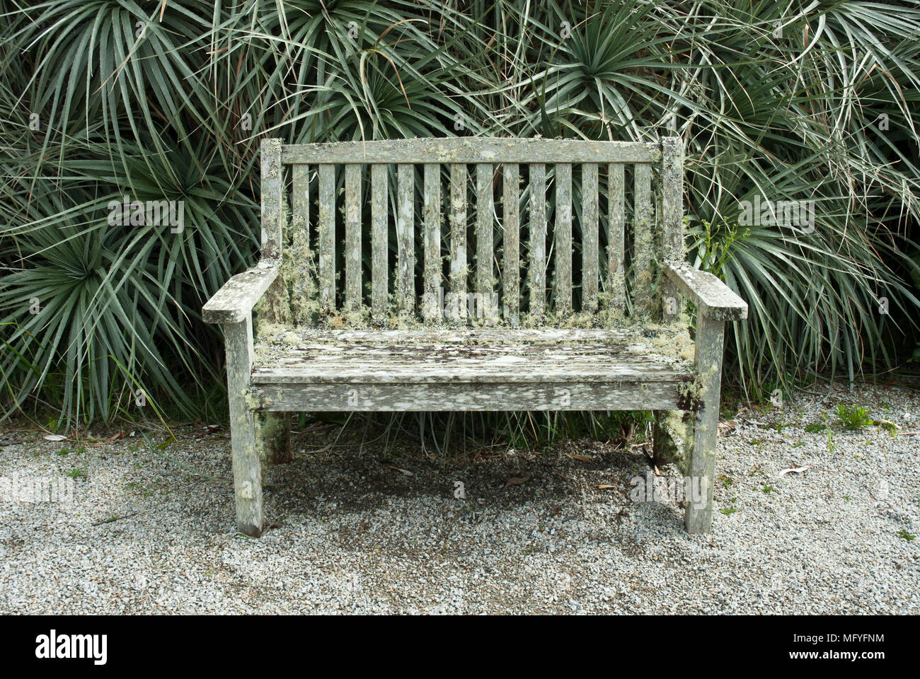 Tonal colours of grey/green/silver with a lichen covered bench in front of ornamental grass. - Stock Image