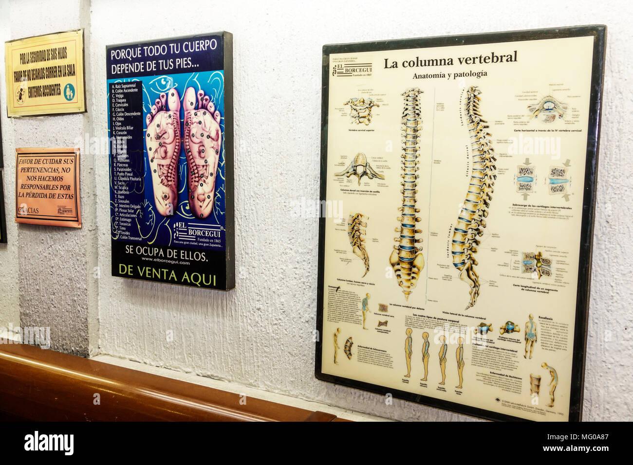 Anatomy Poster Stock Photos & Anatomy Poster Stock Images - Alamy