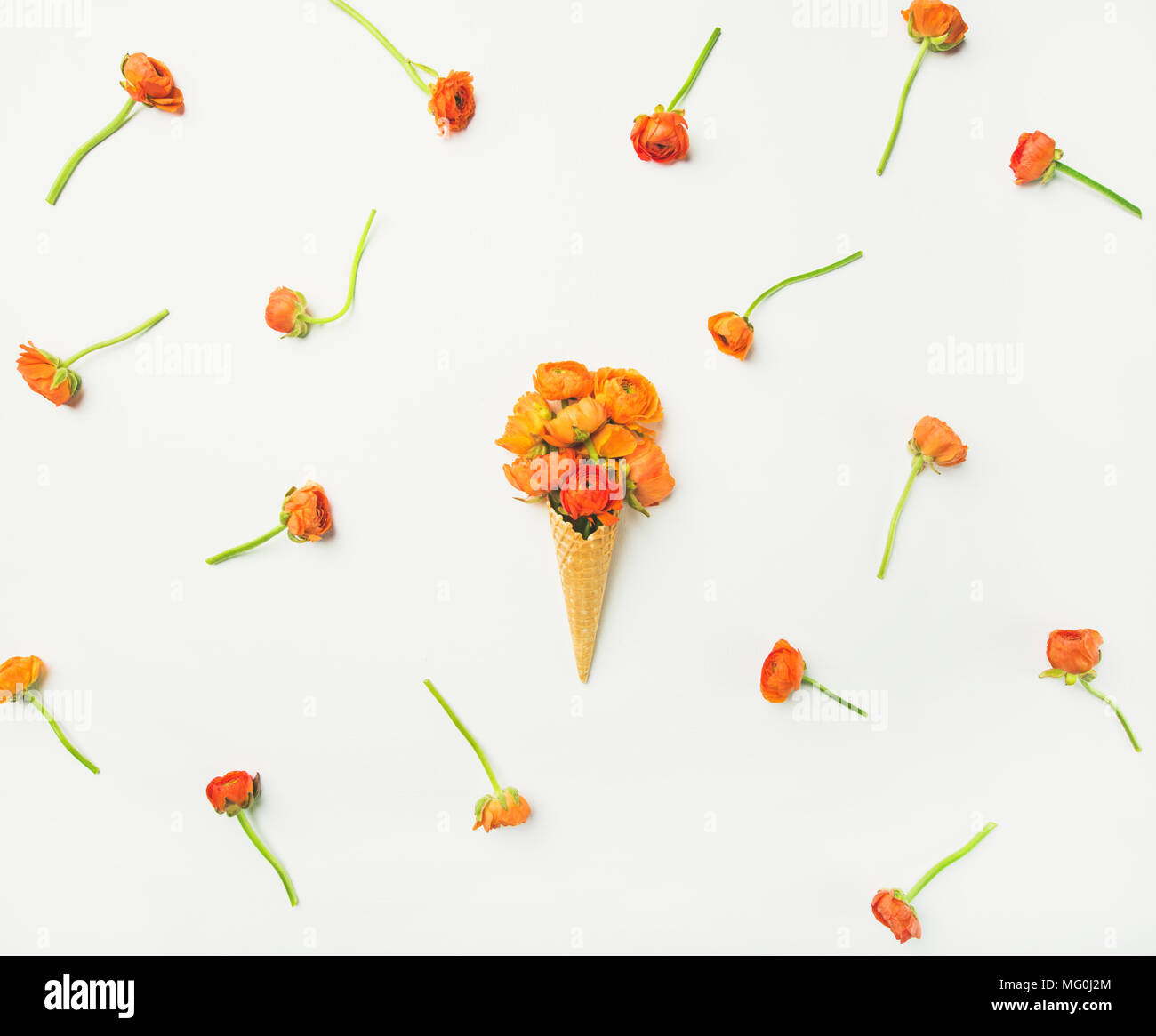Waffle cone with orange buttercup flowers over white background, flat-lay - Stock Image