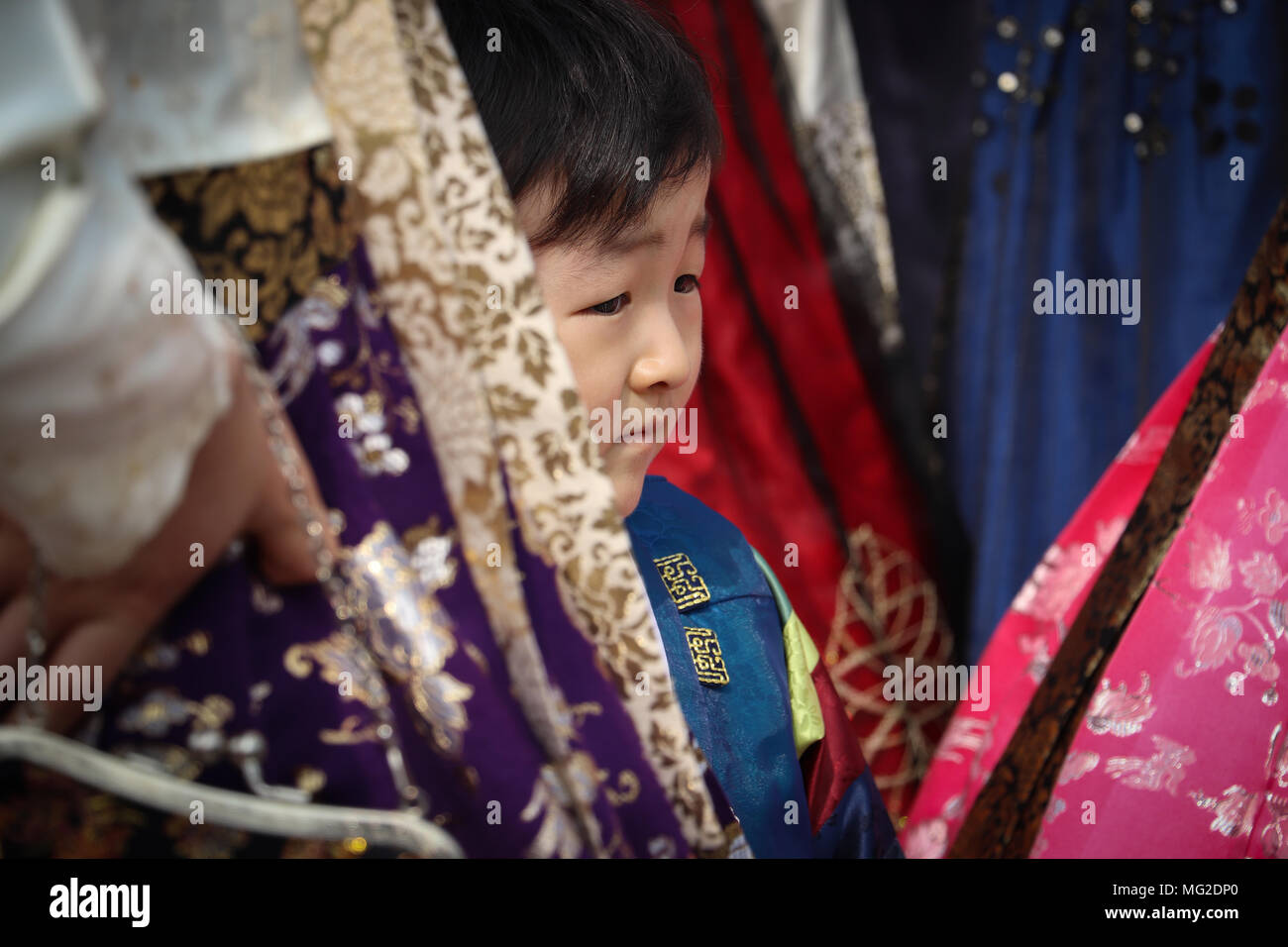 Little Korean boy peeks out from behind his mother's skirt, surrounded by other brilliantly colored hanbok skirts: red, pink, blue, purple, gold. - Stock Image