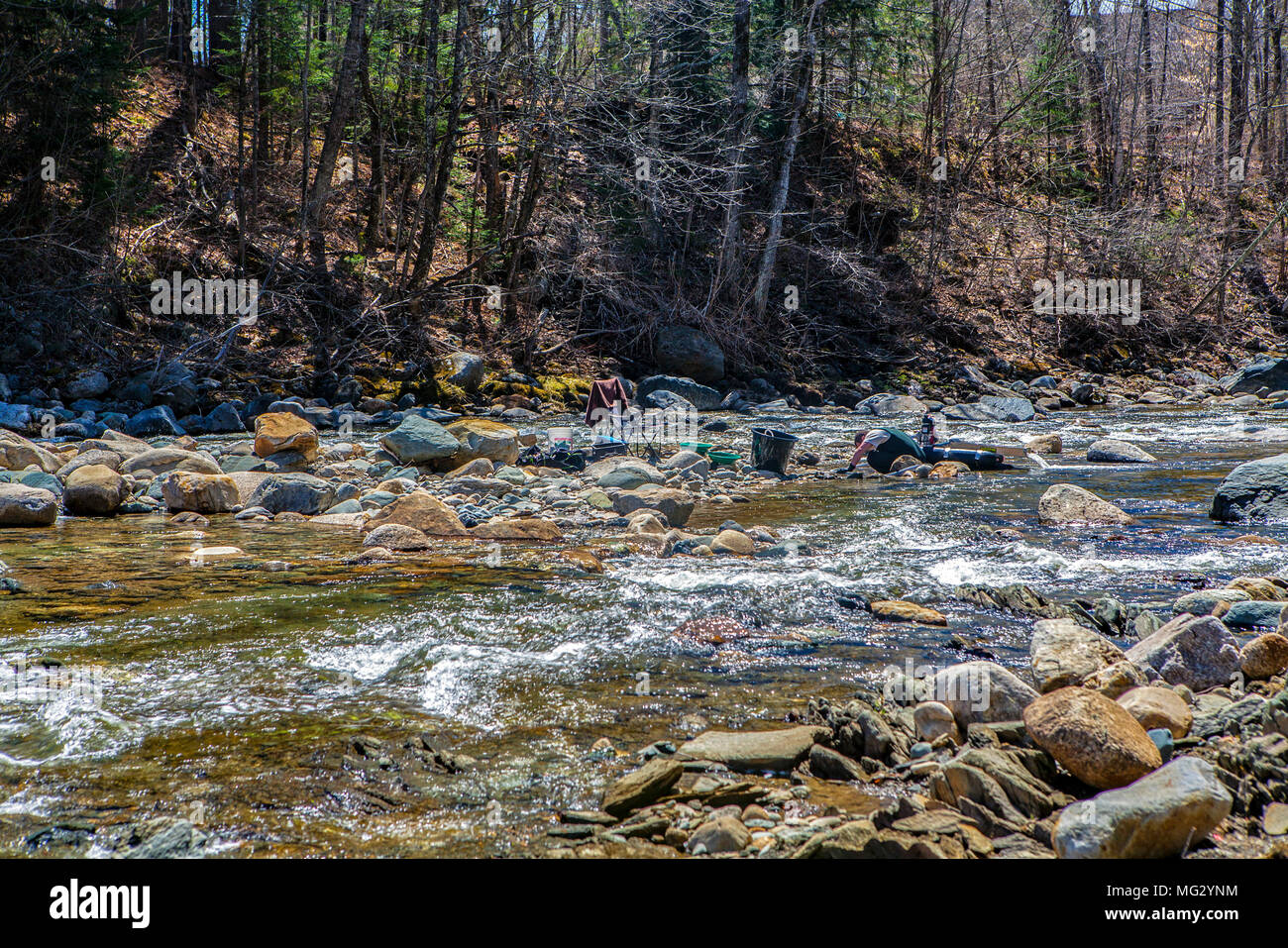 A recreational prospector uses a dredge to find gold in the Wild Ammonoosuc River at Swiftwater, New Hampshire, United States. - Stock Image