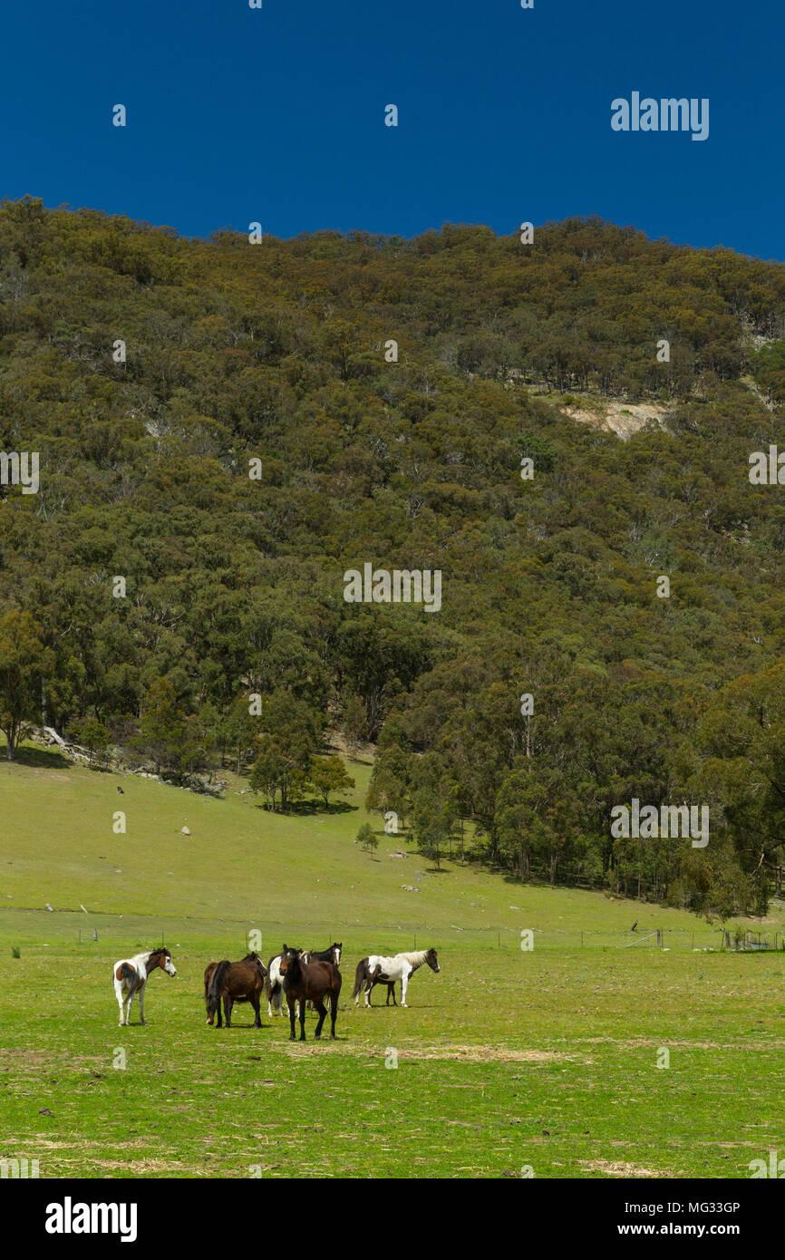 New england region nsw