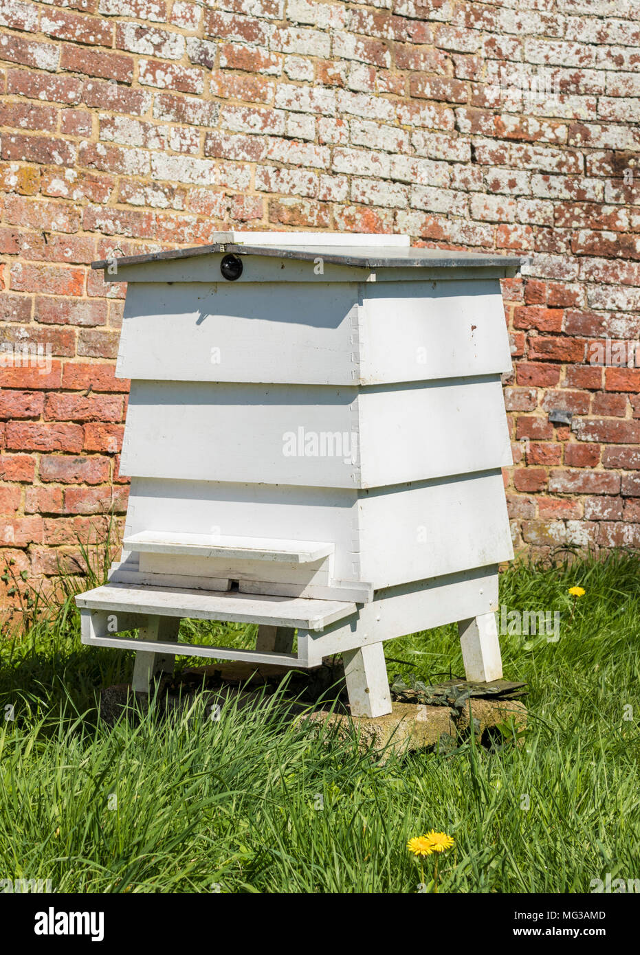 beehive White bee hive in wild meadow England uk gb - Stock Image