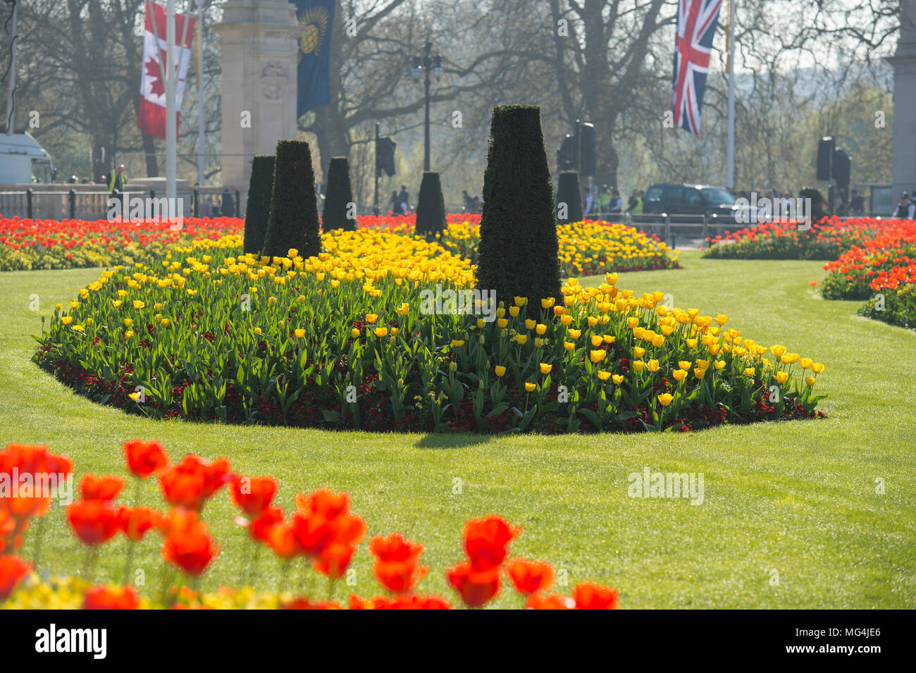 19 April 2018. Hot Spring weather with tulips on display outside Buckingham Palace, London, UK - Stock Image