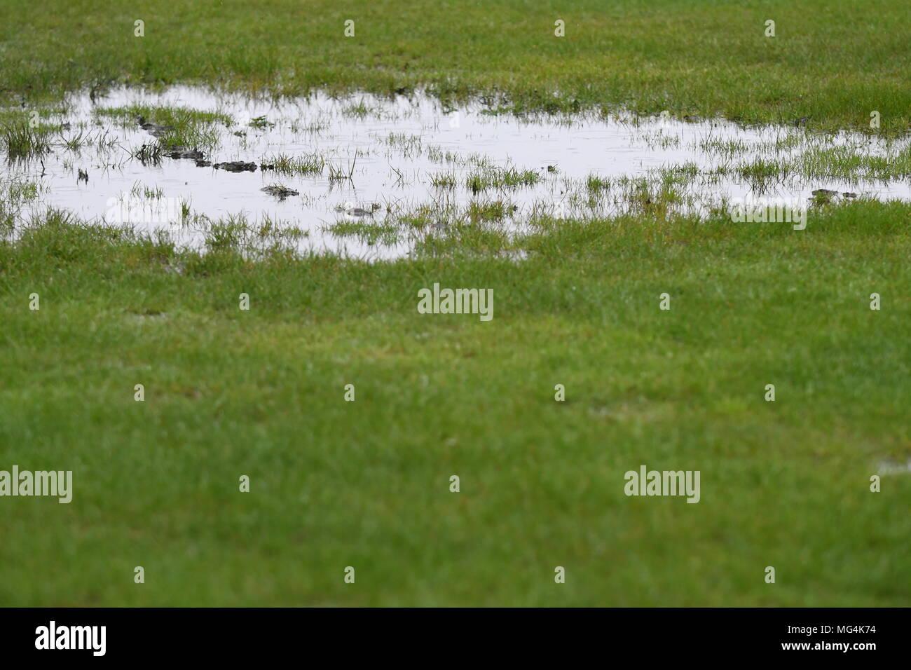 Soaking grass - Stock Image