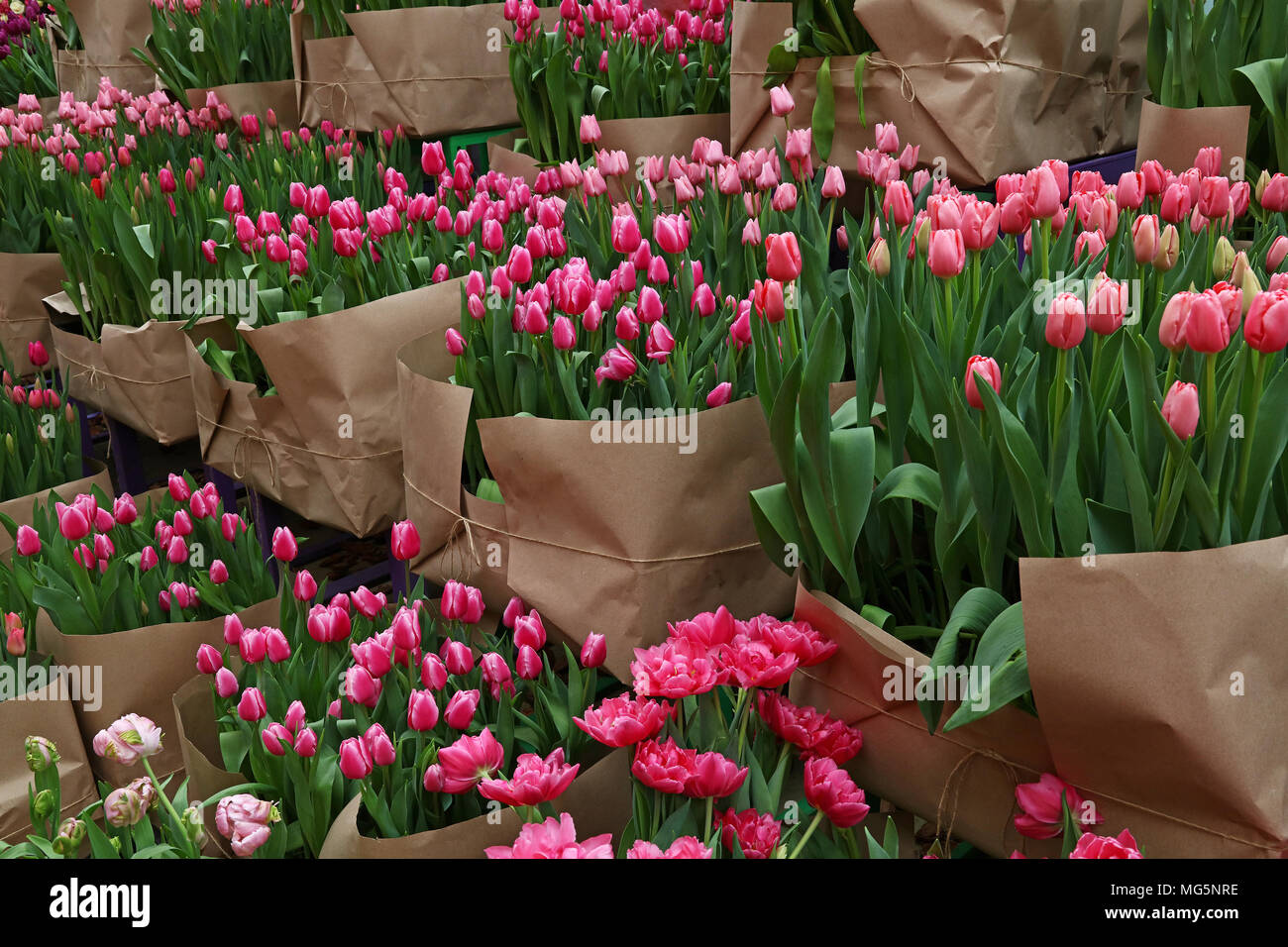 Close Up Tulip Flowers Wrapped With Brown Kraft Paper For Sale In