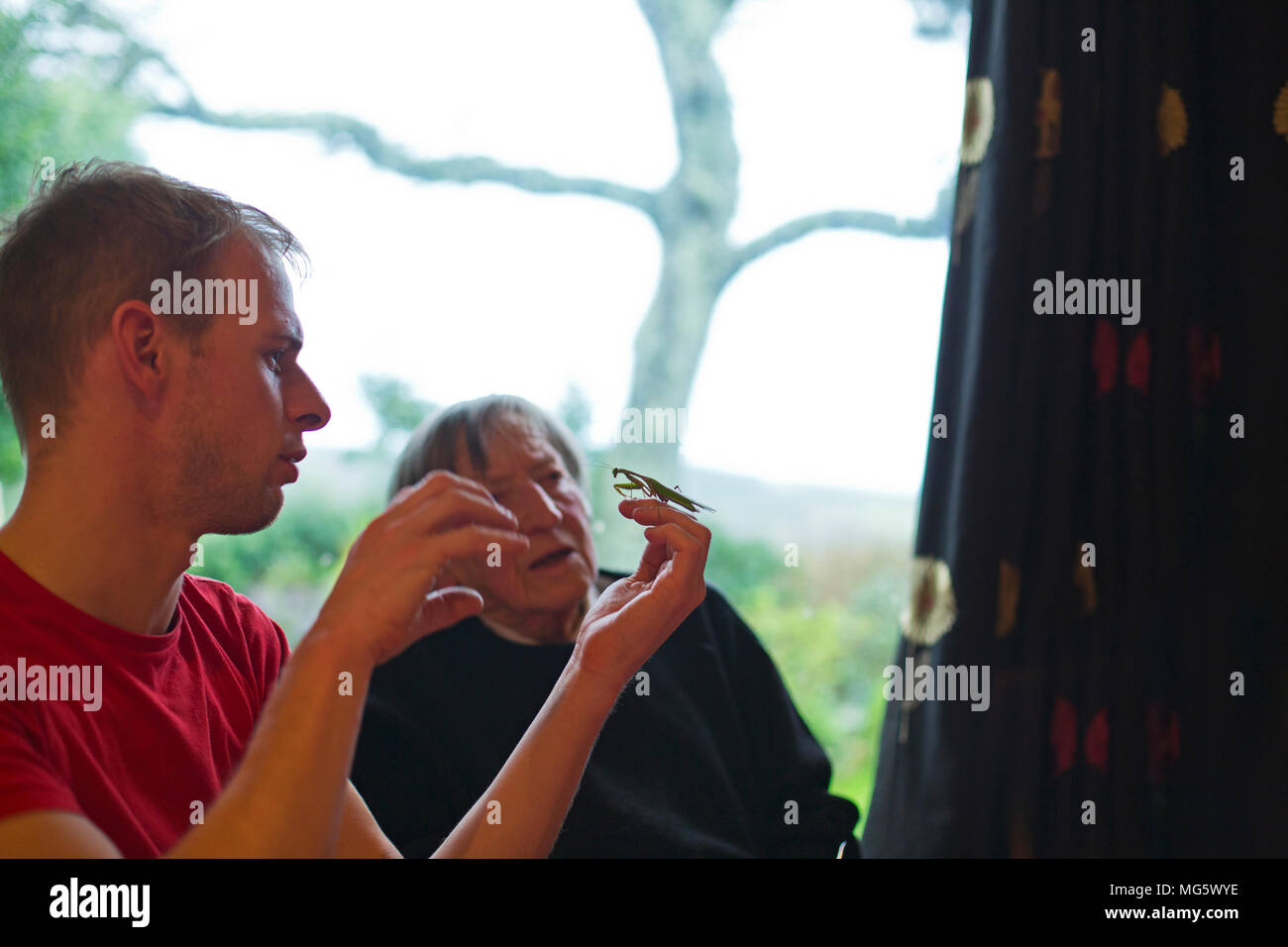 Two people looking closely at a preying mantis - Stock Image