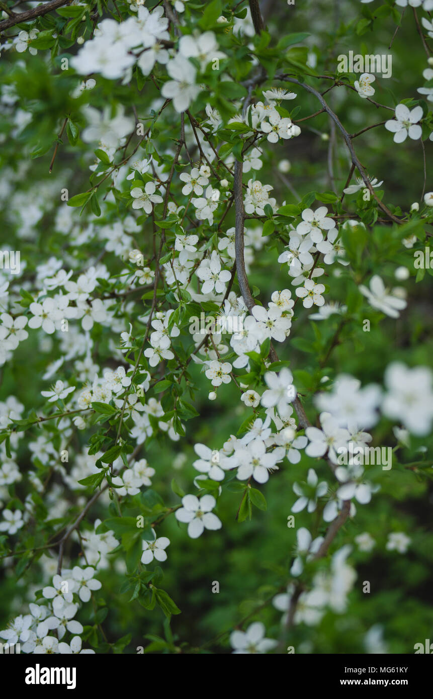 Closeup View Of Beautiful Spring Trees With Fresh Young White