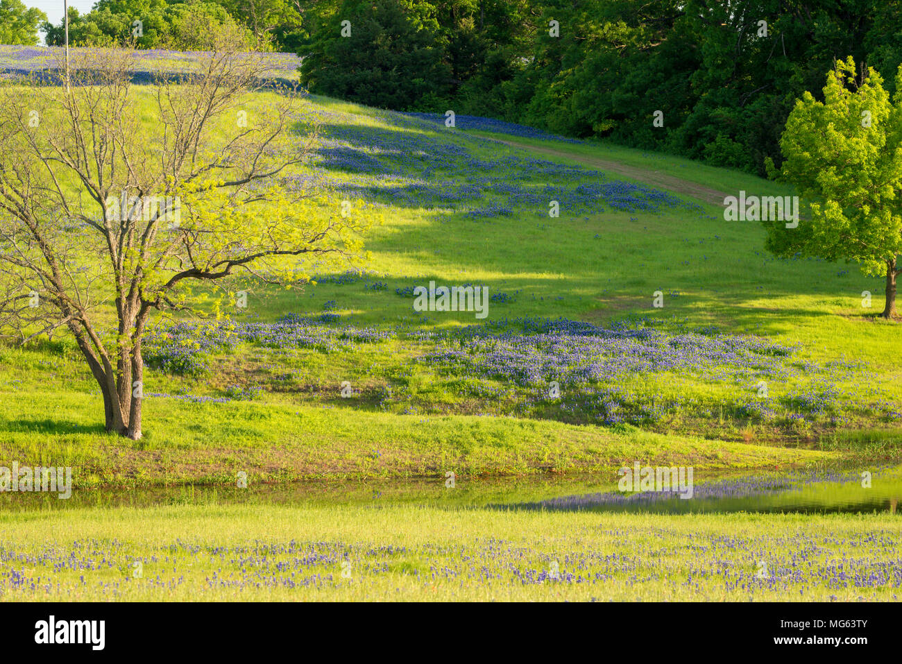 Rural Texas Spring Flowers Reflecting On A Pond Stock Photo
