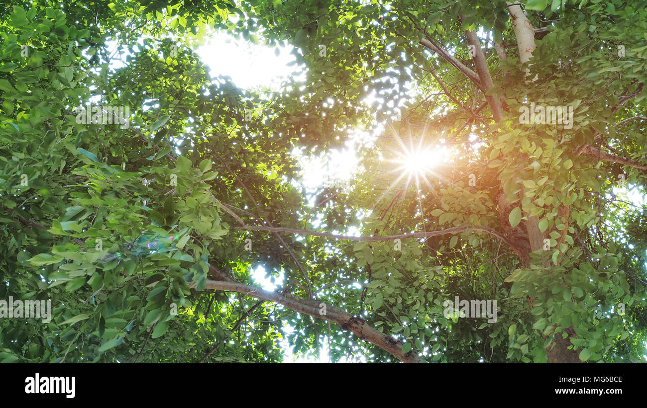 Sun ray glimmering through tree leaves - Stock Image