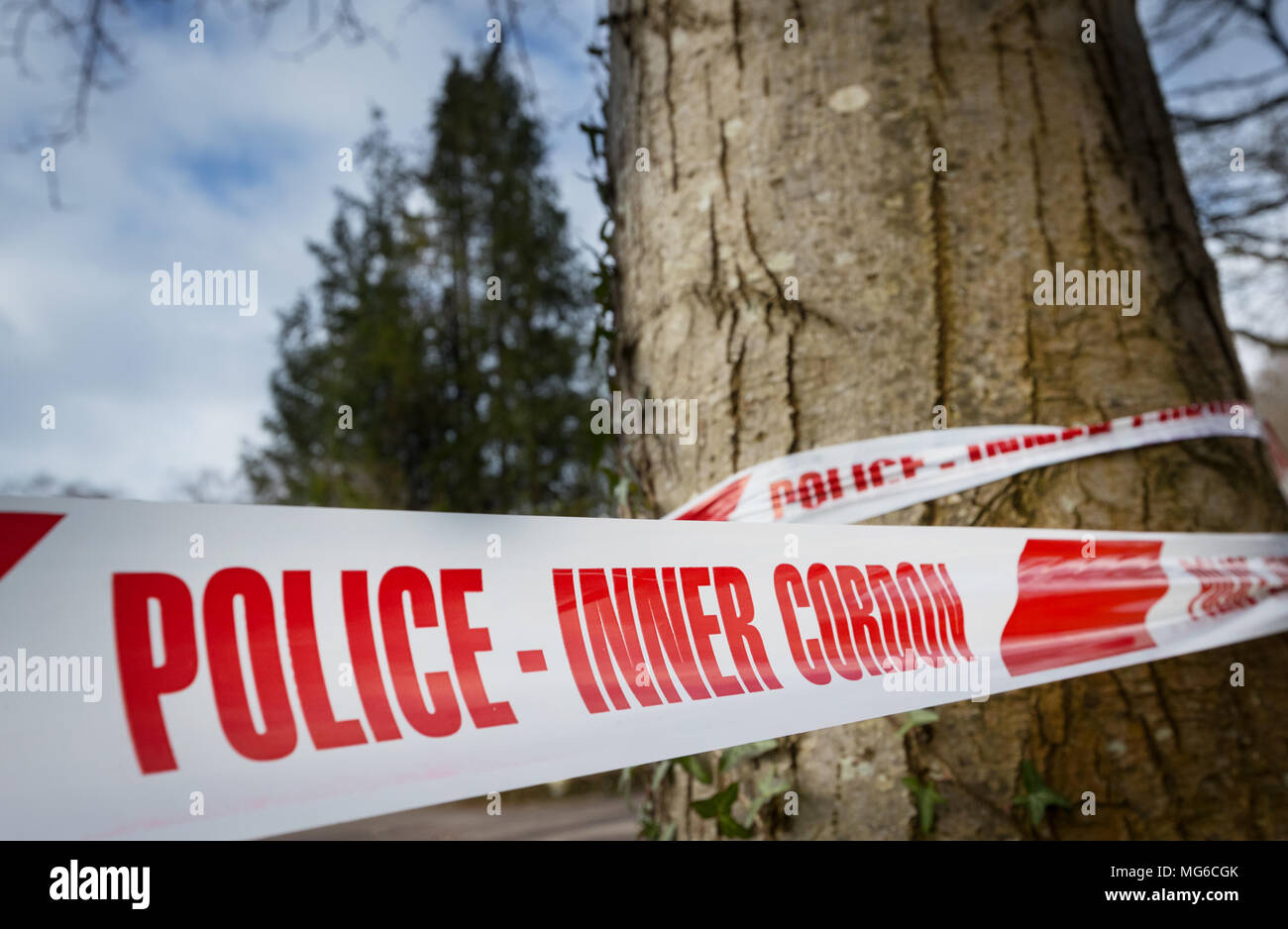 Police Inner Cordon tape wrapped around a tree - Stock Image