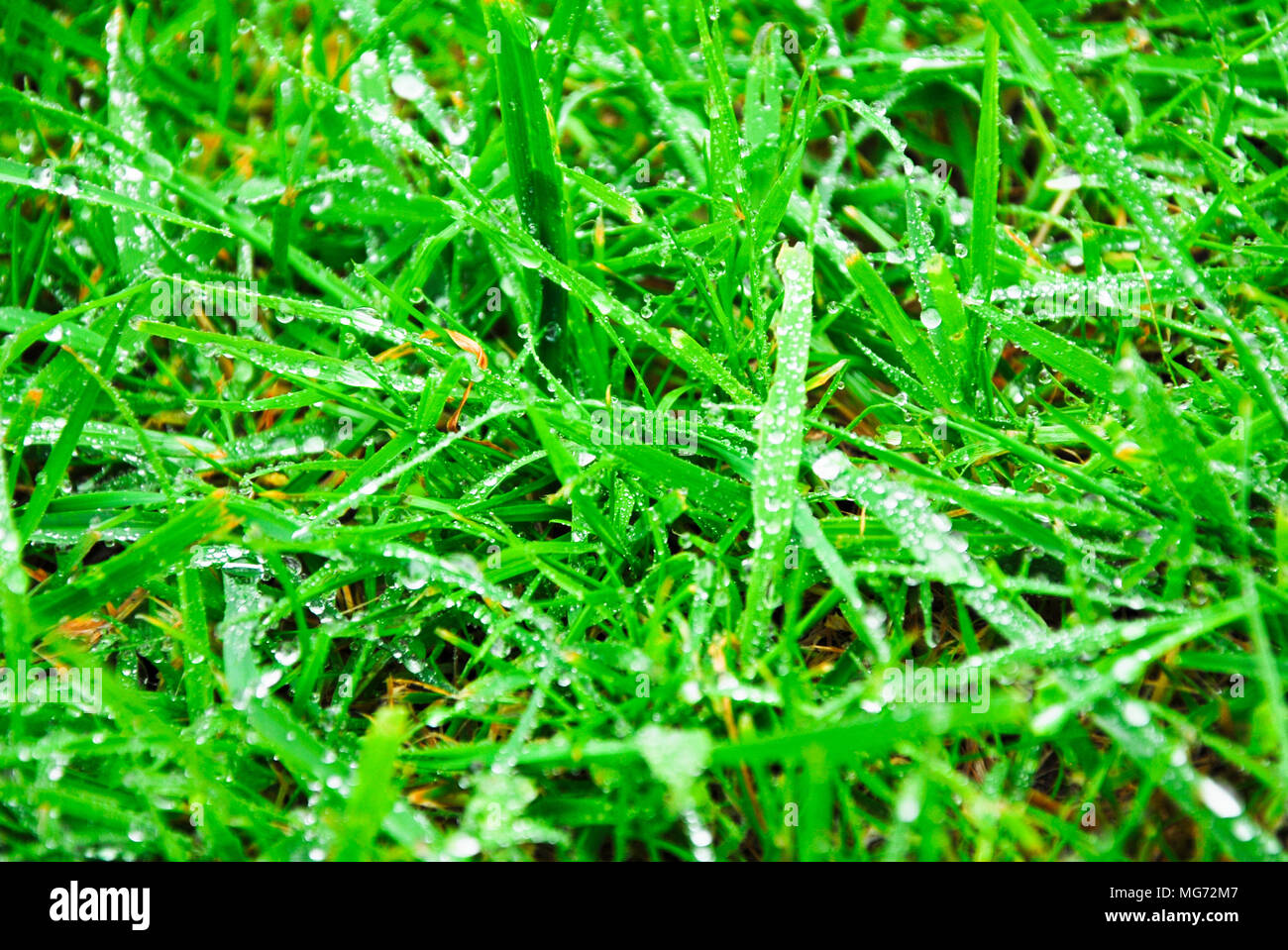 UK Weather: A Saturated Lawn In A Portland Garden, After A Very Wet Day For  Dorset Credit: Stuart Fretwell/Alamy Live News