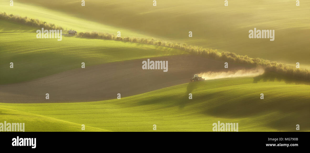 Sunset lines and waves with trees in the spring, South Moravia, Czech Republic - Stock Image