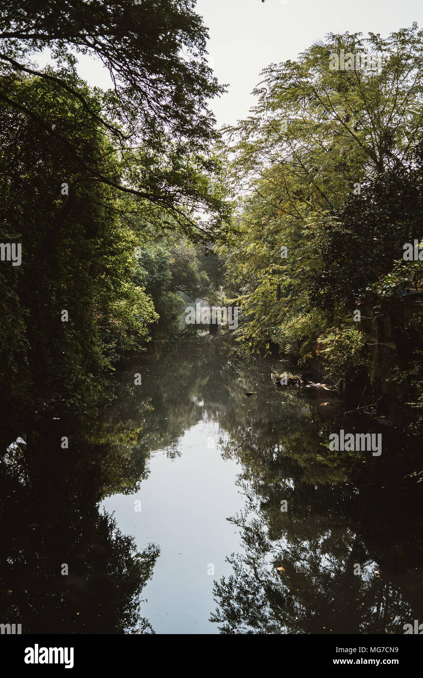 trees hang over a quiet stream brook river in Goa, India Stock Photo
