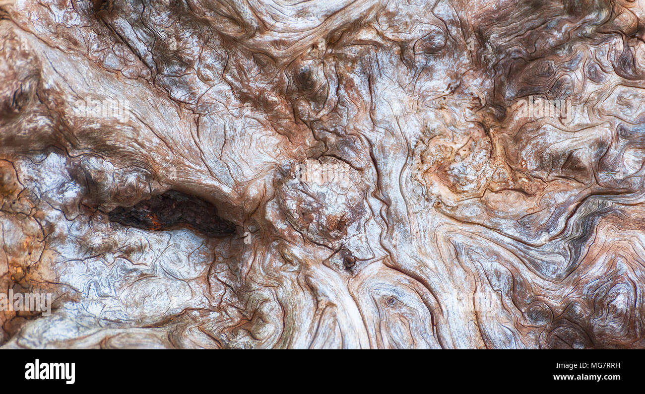 Close up of the interesting lines on a large piece of driftwood on the shores of Oregon Islands Wildlife Refuge on the Oregon Coast. Stock Photo