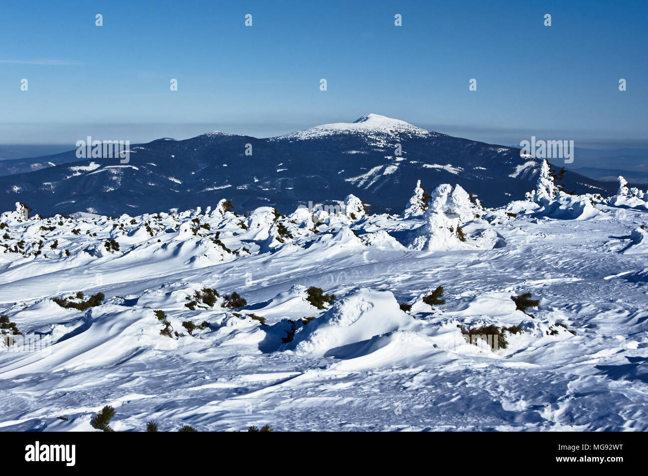 Snow-covered spruces and a view of the Babia Gora mountain in Poland - Stock Image