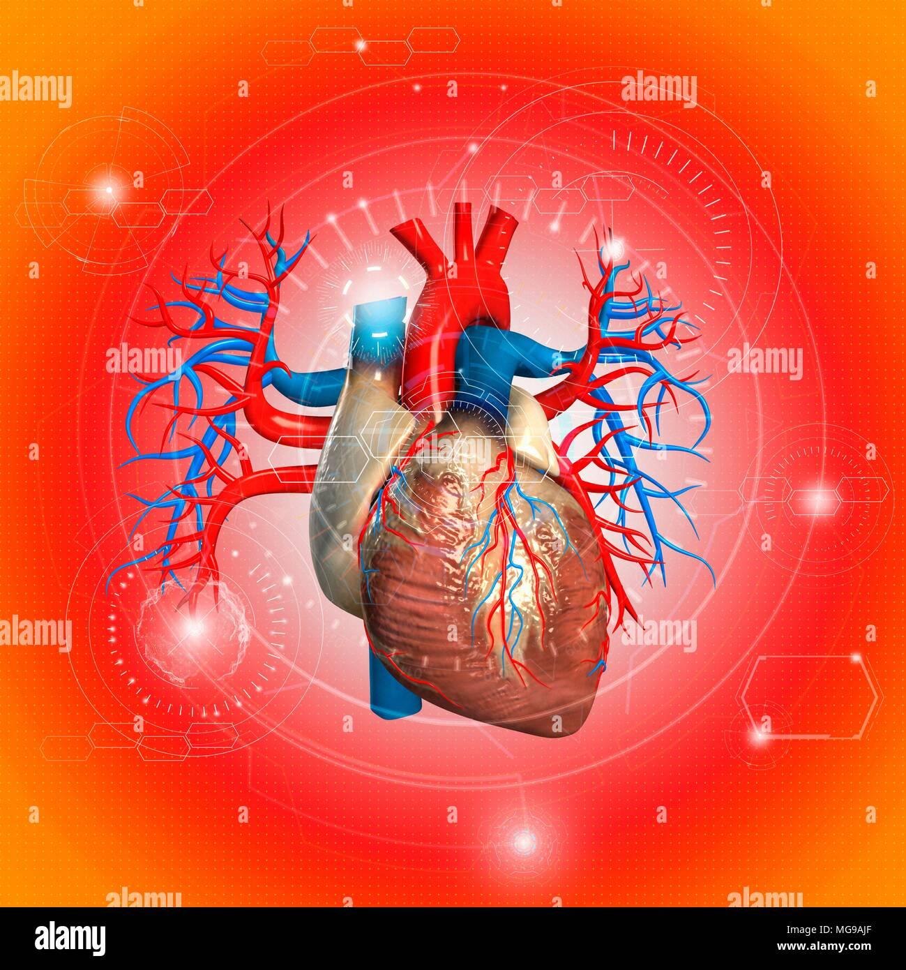 Human heart, illustration. - Stock Image