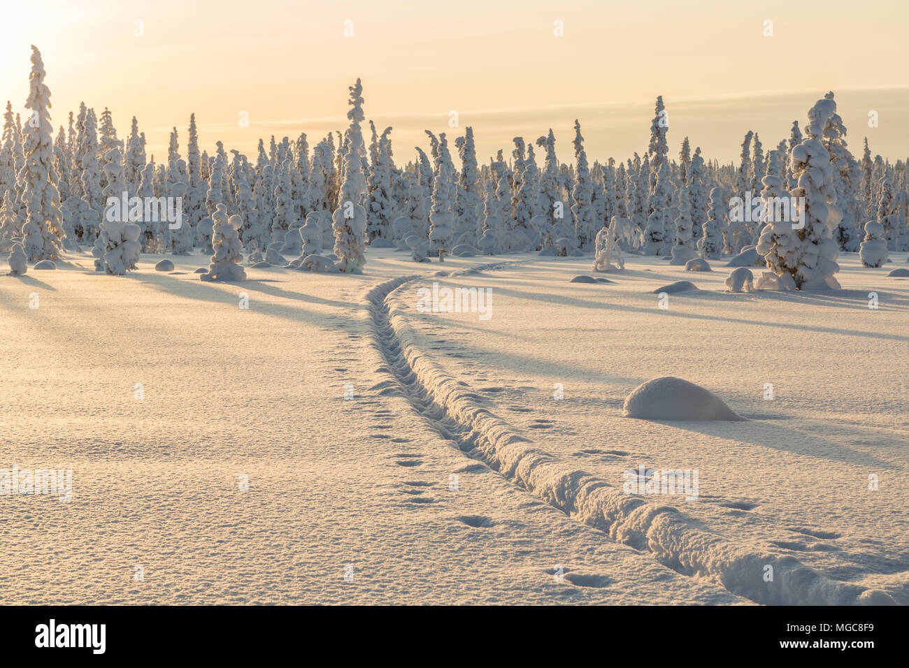 Winter landscape with reindeer tracks in the snow, clear skye and nice warm light, Gällivare county, Swedish Lapland, Sweden - Stock Image