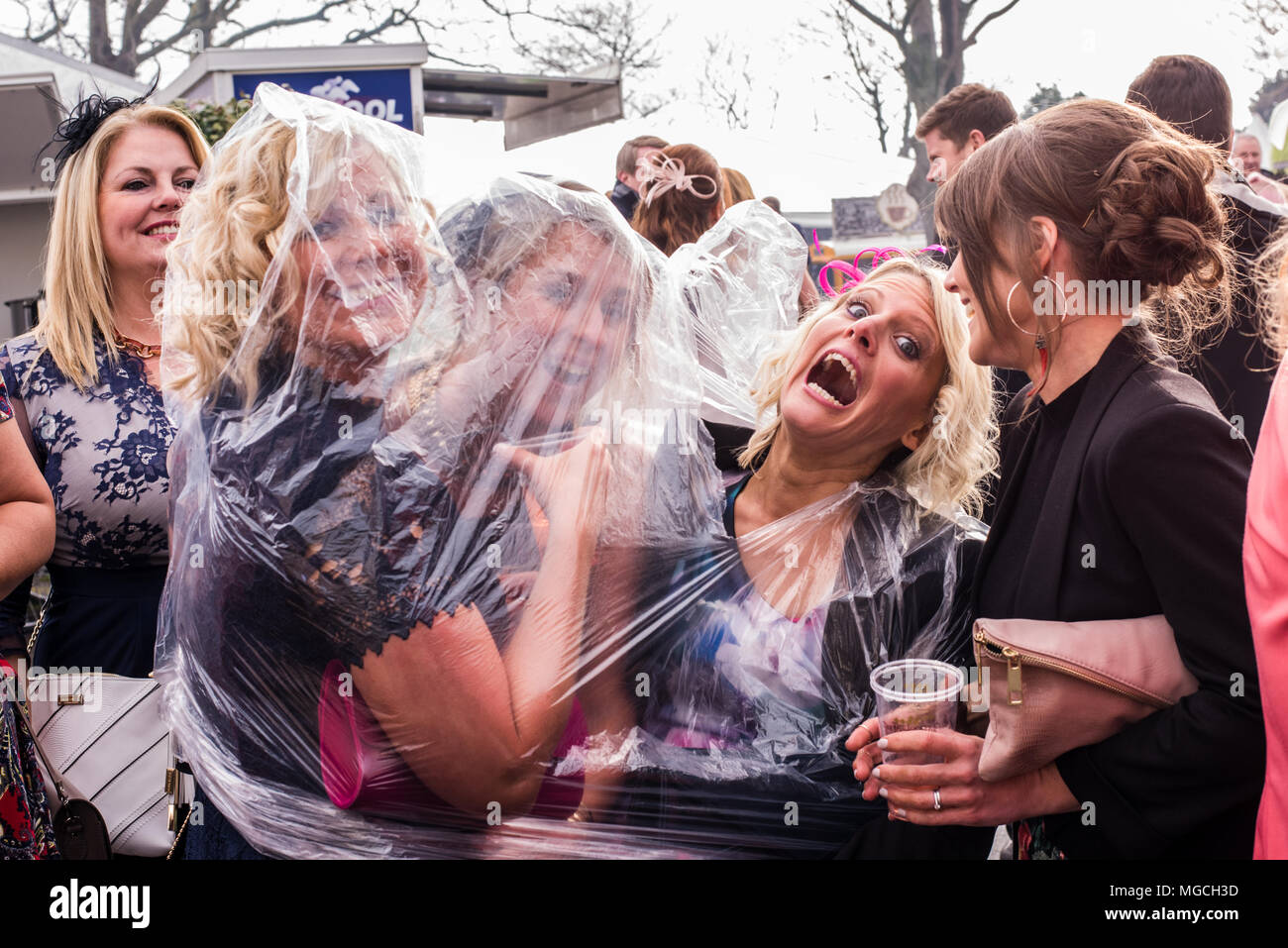 Group of female friends shelter from rain, under a waterproof transparent poncho at the Grand National, Aintree, Liverpool, England, 9th April, 2016 - Stock Image