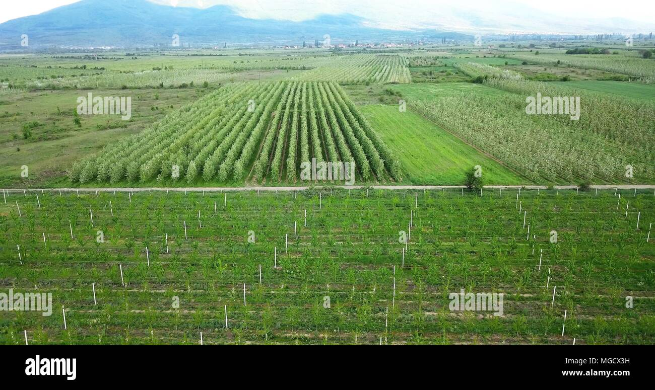 drone photography,aerial view of orchards in resen, prespa, macedonia,image - Stock Image