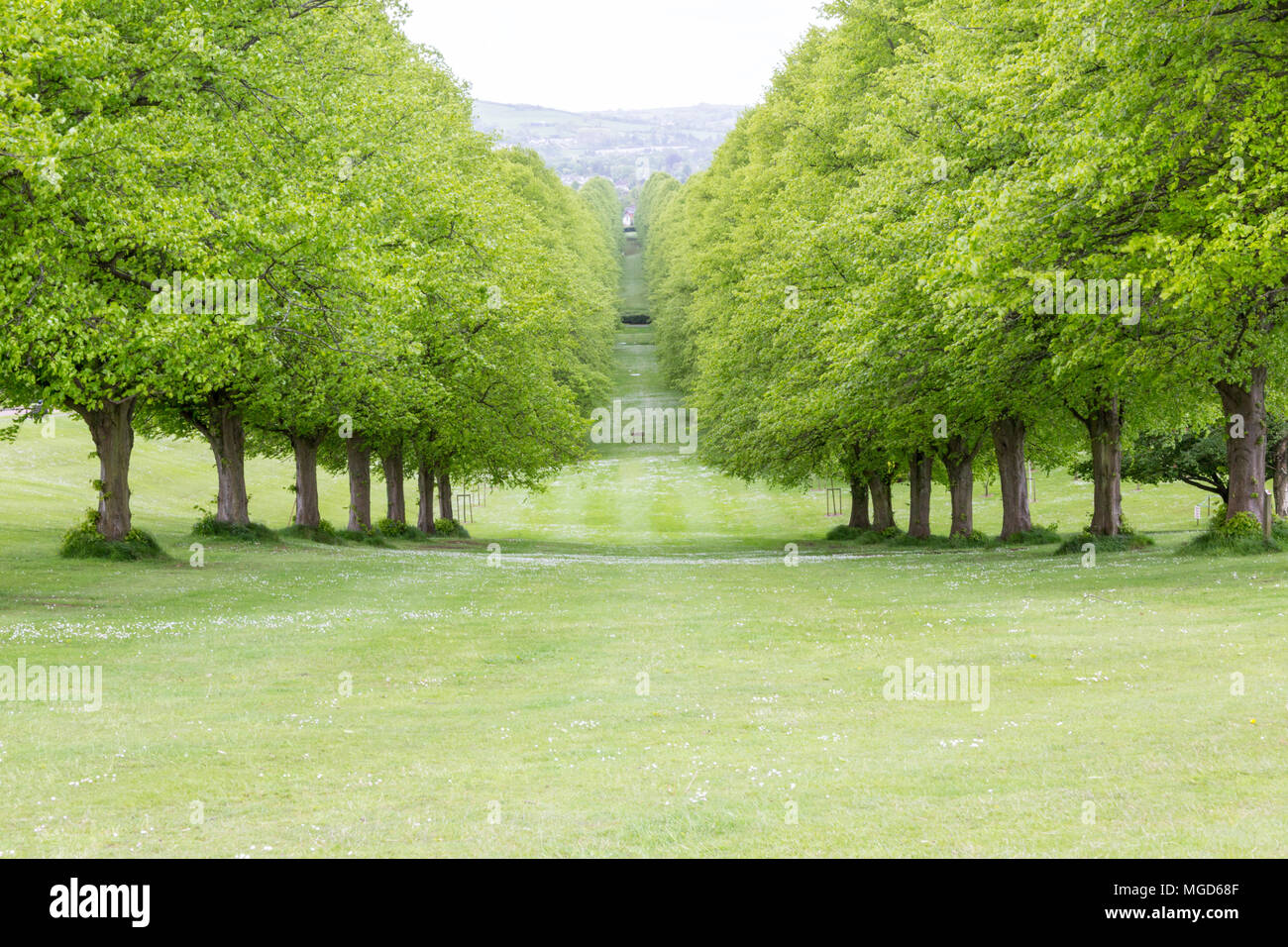 Belfast/N. Ireland - May 31, 2015: Trees line the Prince of Wales Avenue leading up to Parliament Buildings, also known as Stormont. - Stock Image