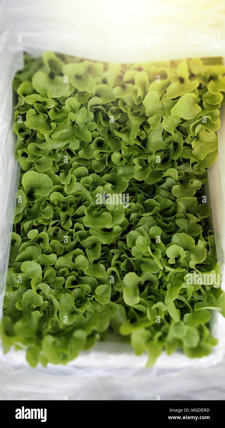 Grow Water Plants Row Stock Photos & Grow Water Plants Row