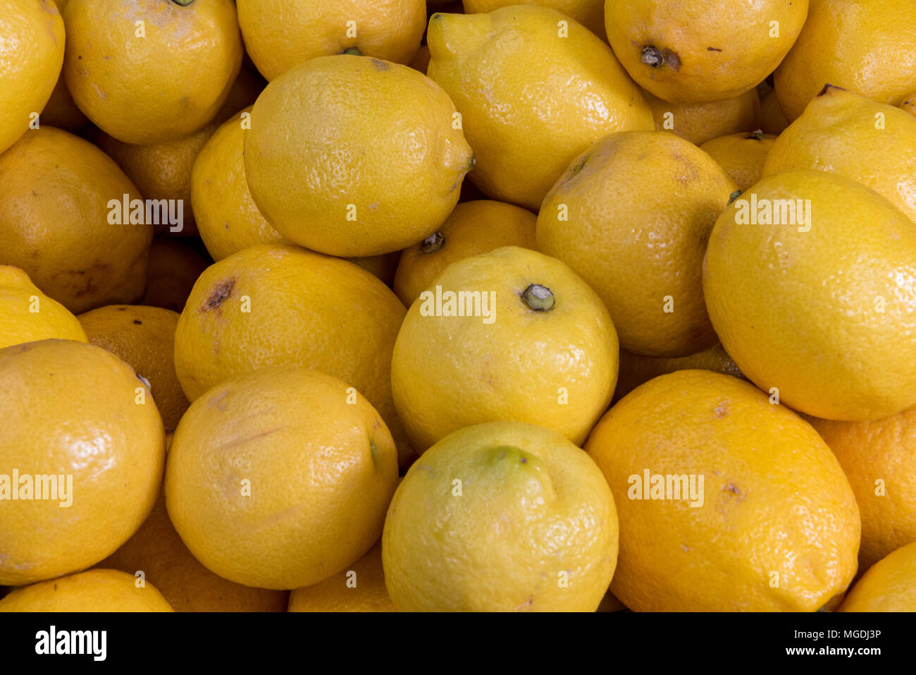 Freshly picked lemons or citrus fruits on display on a market traders greengrocery stall at borough market. Fresh fruits and vegetables greengroceries - Stock Image
