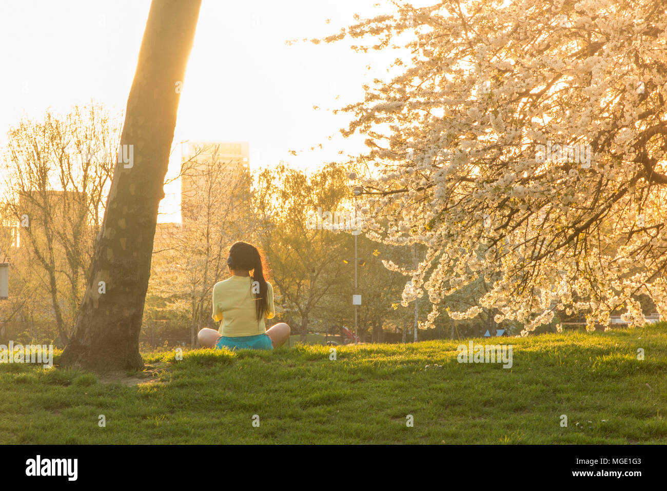 A girl meditates under the blossom of cherry trees in a park in North London Stock Photo
