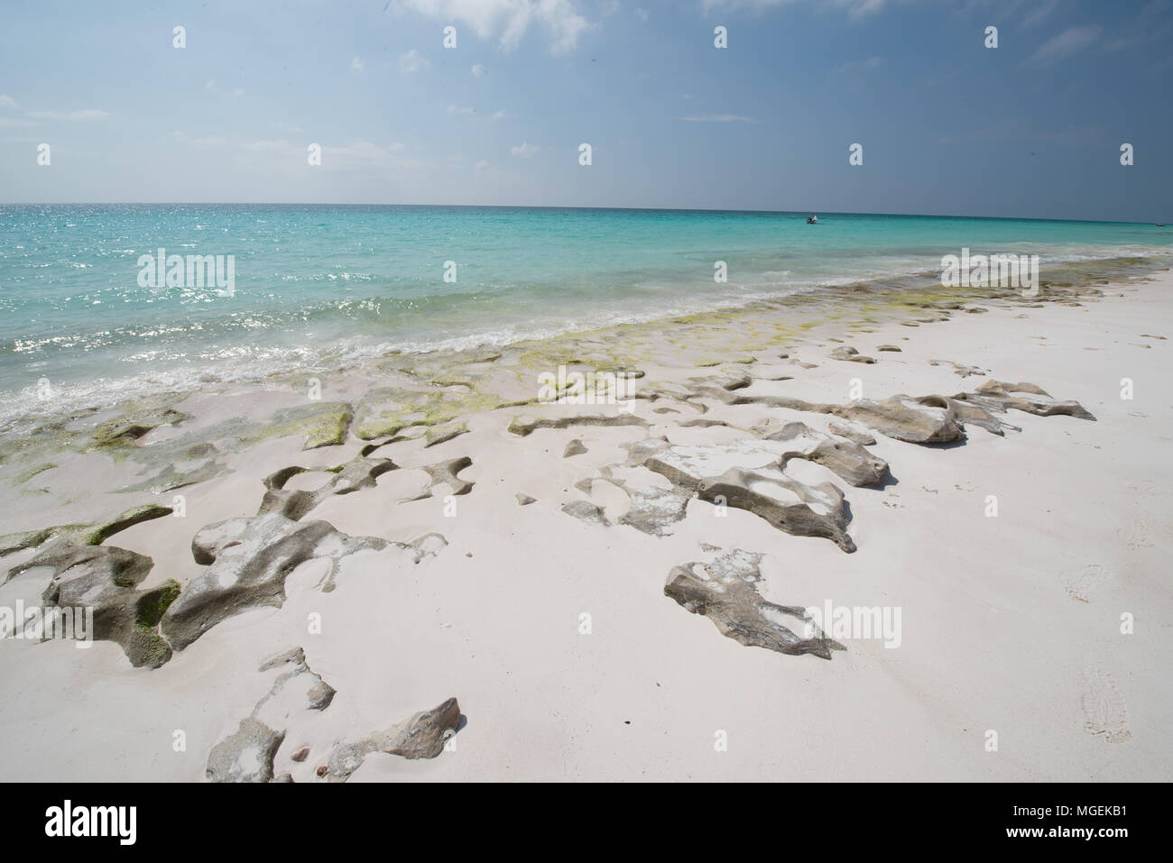 Nature of the Socotra Island, Yemen - Stock Image
